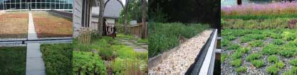 series of photos with examples of green roofs